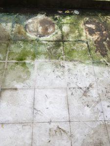 Algae And Mold At Balcony